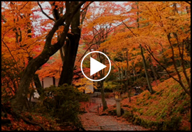 秋 MOVIE: AUTUMN ATOMOSPHERE